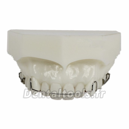 Modèle anatomique dentaire Orthodontie Maintenance de traitement M3007
